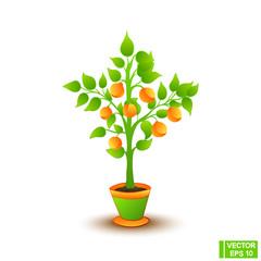 Citrus tree in a flowerpot
