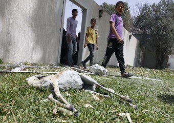People walk past a dead gazelle at a damaged area at the house of Saif Al-Arab Gaddafi, son of Libyan leader Muammar Gaddafi, in Tripoli