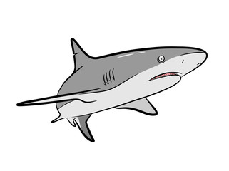 Shark Vector Cartoon, a hand drawn vector Cartoon Illustration of a grey shark