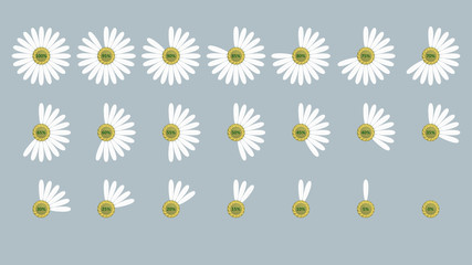 Vector image. Circular progress bar in the form of chamomile. Petals indicators. To reflect the loading, unloading and infographic process. For desktop, mobile applications and web.