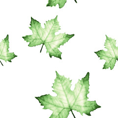 Watercolor seamless pattern with Green maple leaves.