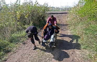 Migrants pull a wheelchair through a cornfield after crossing into the country from Serbia at the border near Roszke