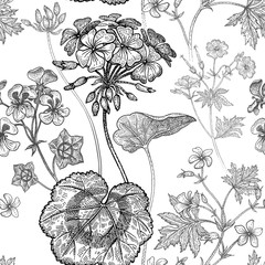 Geranium flowers. Seamless floral pattern.