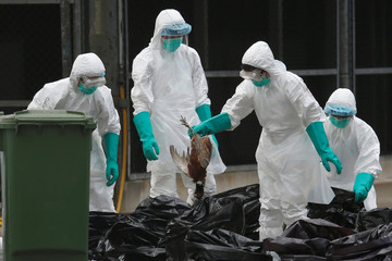 Health officers cull poultry at a wholesale market in Hong Kong