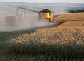 A combine harvests wheat in a field of the Solgonskoye farming company near Talniki