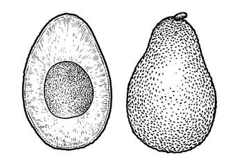 Avocado illustration, drawing, engraving, ink, line art, vector