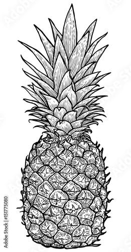 Line Art Xl 2019 : Quot pineapple illustration drawing engraving ink line art