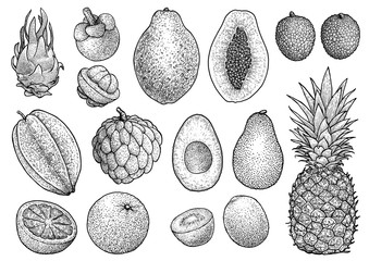 Exotic fruit cllection illustration, drawing, engraving, ink, line art, vector