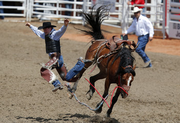 Maier of Merrit, BC gets bucked off the horse Upbeat Jester in the novice saddle bronc event during the 101st Calgary Stampede rodeo in Calgary