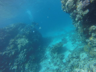 Red sea, egypt, israel, recreation, karall reef, underwater fairy tale, diving, water wealth, fish, nature,