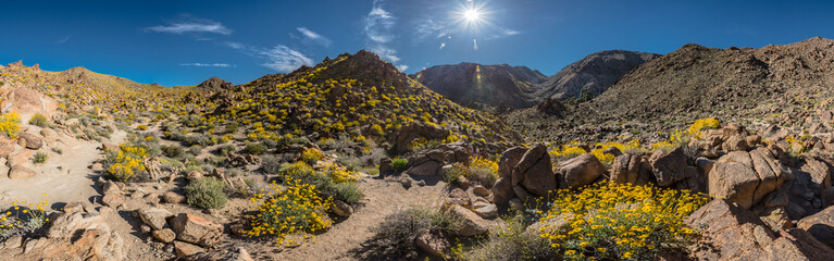 Panorama of Blooming Trail to FortyNine Palms Oasis
