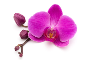 Spoed Fotobehang Orchidee Pink orchid on the white background.