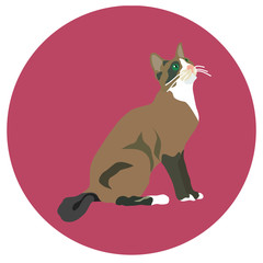 938271 Cats of different breeds. Icons. Vector image in a flat style. Illustration on a round background. Element of design, interface