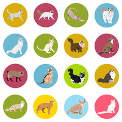 938274 Cats of different breeds. Icons. Vector image in a flat style. Illustration on a round background. Element of design, interface