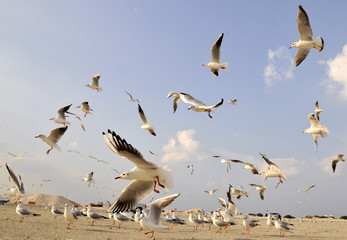 Seagulls fly to catch bread thrown to them by people at a beach in Jumeirah in Dubai