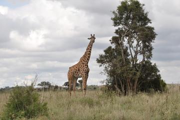 Safari Animals and Wildlife