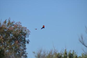 Cerf-volant multicolore dans le ciel de Camargue