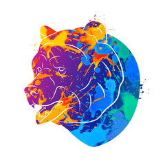 Fototapete - Bear icon Abstract