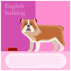 English buldog postcard