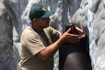Titan, a sea lion, and its trainer take part in presentation at Huachipa Zoo in Lima