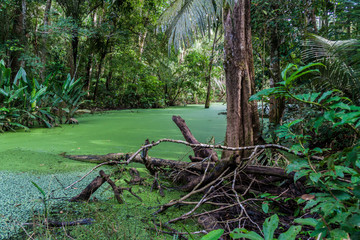 River in a jungle of Madidi National Park, Bolivia