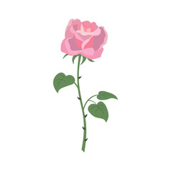 Rose icon on the white background for your design.