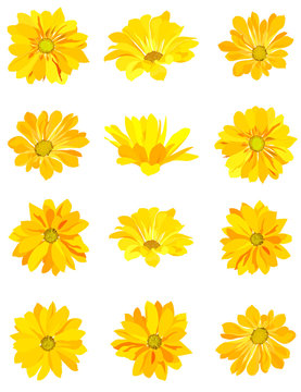 set of yellow flowers. isolated on white