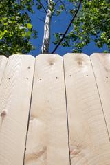 New cedar privacy fence with aspen trees overhead