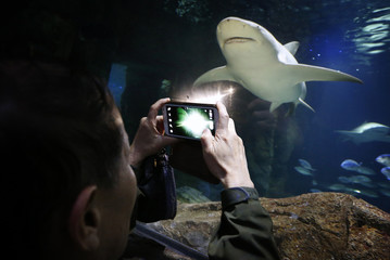 A Chinese tourist takes a photograph of a shark swimming towards him at the Sydney Aquarium