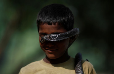 The Wider Image: Charming snakes