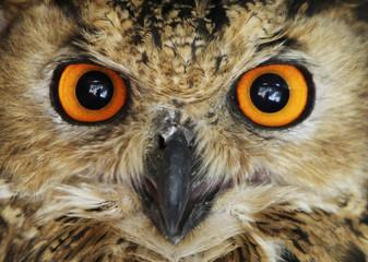 An owl is seen at Jordan's zoo near Amman