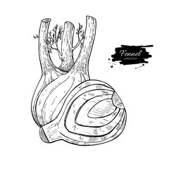 Fennel hand drawn vector illustration. Isolated Vegetable engraved style object with sliced pieces.