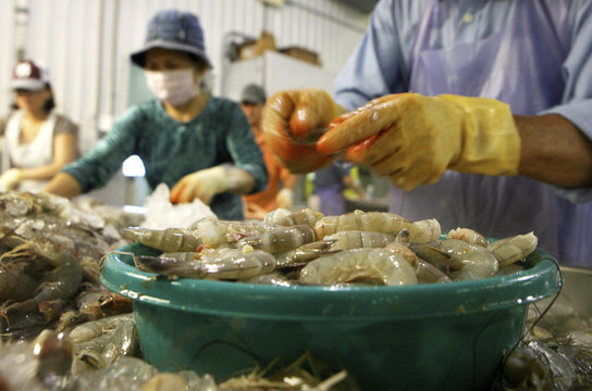 Employees dehead Louisiana white shrimp at C.F. Gollott & Son Seafood in D'Iberville, Mississippi