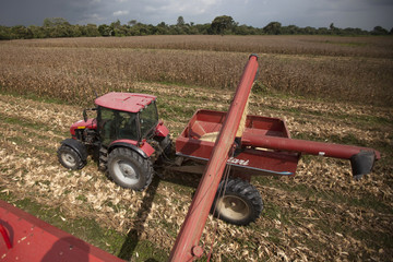 A harvester collects corn grains on a tractor on the expropriated and now redistributed farm of El Charcote in the central state of Cojedes