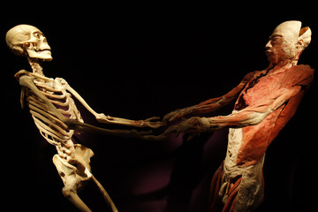 """Plastinated human bodies, part of """"The Human Body"""" exhibition, are seen during a media tour at Antipa Museum in Bucharest"""