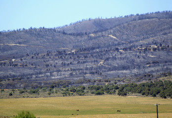 Horses graze in a field as the aftermath of the Wood Hollow Fire is seen in background