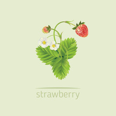 Vector realistic illustration of strawberry with leaves and flowers.