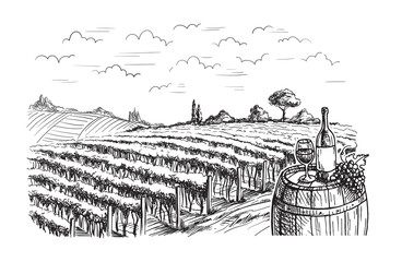 Rows of vineyard grape plants in graphic style, hand-drawn vector illustration.
