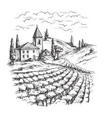Rows of vineyard grape plants and castle in graphic style, hand-drawn vector illustration.