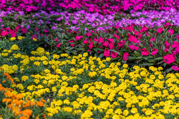 Pink Purple Yellow Flower Bed