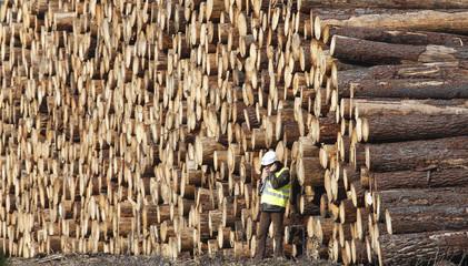 A man works near the logs of pine trees felled by a storm in Belin Beliet