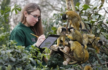 Mammal keeper Kate Sanders poses with black-capped squirrel monkeys during a photo call during the ZSL London Zoo's annual inventory count in London