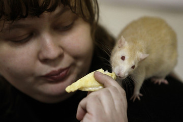"""A woman feeds a rat on her shoulder during the international exhibition of rodents """"Autumn Footprints - 2013"""" in Minsk"""