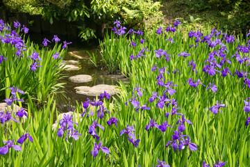 Foto op Plexiglas Iris Stone steps in a pond amidst a meadow of irises in a zen garden