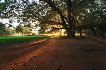 Sunset, tree and rain in Cambodia