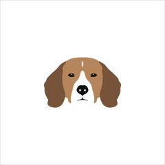 Beagle head isolated on white background.