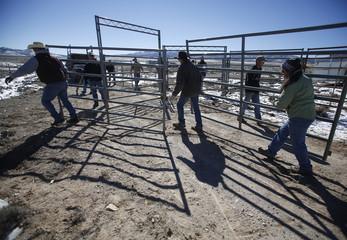 Bureau of Land Management (BLM) staff build a corral before gathering wild horses south of Garrison, Utah