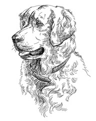 Vector Golden retriever