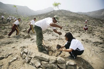 A school girl plants a tree during celebrations to mark Earth Day in the outskirts of Lima