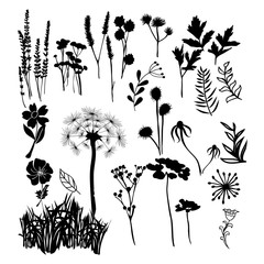 Collection silhouette illustration of wild flowers, herbs and grasses.